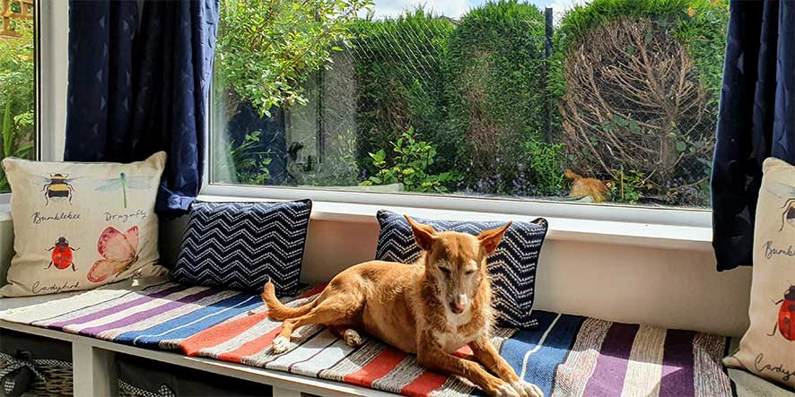 Bungalow's lounge window seat with dog enjoying lying in it in the sun